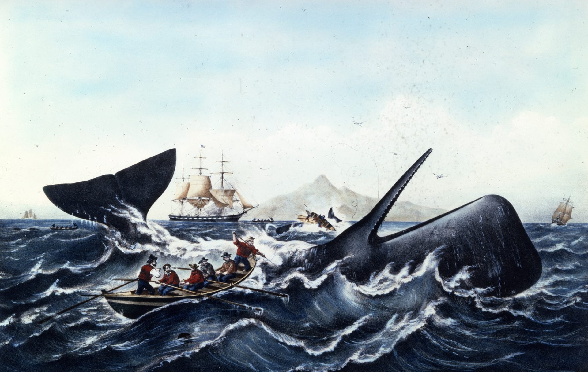 Whales and Hunting - New Bedford Whaling Museum